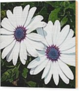 A Pair Of White African Daisies Wood Print