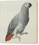 A Parrot Wood Print