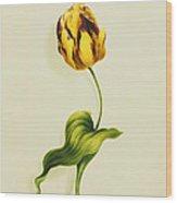 A Parrot Tulip Wood Print