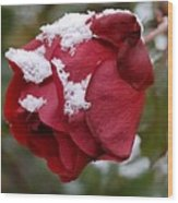 A Passing Unrequited - Rose In Winter Wood Print