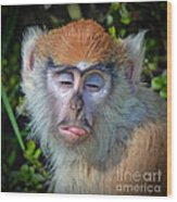 A Patas Baby Monkey Behaving Badly Wood Print
