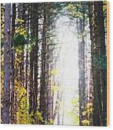 A Path In The Pines Wood Print