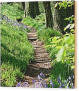 A Path Through An English Bluebell Wood In Early Spring Wood Print