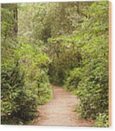A Path To The Redwoods Wood Print