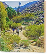 A Pause On Lower Palm Canyon Trail In Indian Canyons Near Palm Springs-california Wood Print