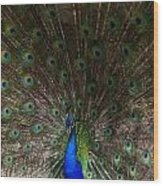 A Peacock's Feathers Wood Print