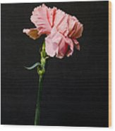 A Pink Carnation Wood Print