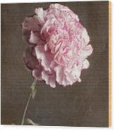 A Pink Carnation Wood Print