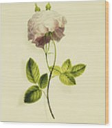 A Pink Rose Wood Print by James Holland