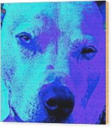 A Pit Bull's Love Is Forever// End Dog Fighting Wood Print by Q's House of Art ArtandFinePhotography