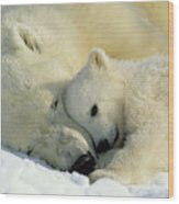 A Polar Bear And Her Cub Napping Wood Print