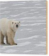A Polar Bear On Hudson Bay Wood Print