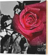 A Pop Of Red - Rose  Wood Print