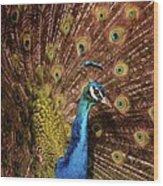 A Preening Peacock  Wood Print