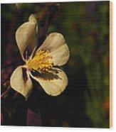 A Pretty Flower In The Sun Wood Print