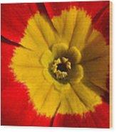 A Prim Rose Wood Print