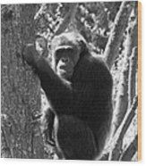 A Primate Wood Print