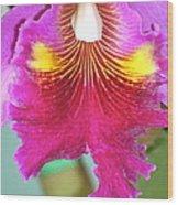 A Purple Cattelaya  Orchid Wood Print