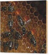 A Queen Bee Walks In The Center Wood Print