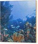 A Quiet Underwater Day Wood Print