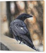 A Raven In Winter Wood Print