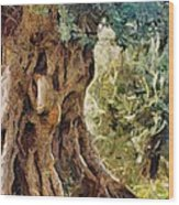 A Really Old Olive Tree Wood Print