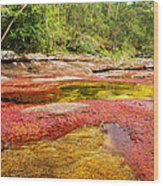 A Red And Yellow River In Colombia Wood Print