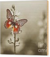 A Red Butterfly On The Moody Field Wood Print