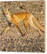 A Red Fox Wood Print