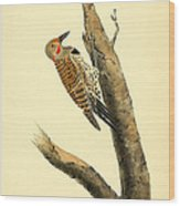 A Red Moustached Woodpecker Wood Print by Philip Ralley