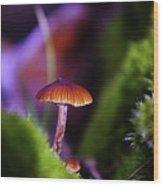 A Red Mushroom  Wood Print