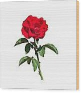 A Red Rose On White Wood Print