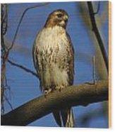 A Red Tail Hawk Wood Print