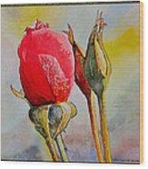 A Rose Awaitingtwo More Roses Wood Print
