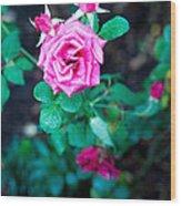 A Rose Blooms Wood Print