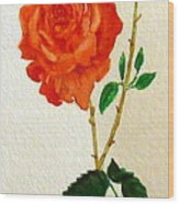 A Rose For Rosa Wood Print