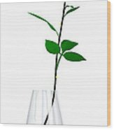 A Rose For The Woman I Love... Wood Print
