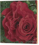 A Rose Within A Rose Wood Print