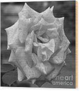 A Rose In Black And White Wood Print
