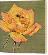 A Rosy View Wood Print