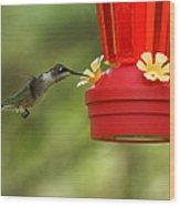 A Ruby-throated Hummingbird Wood Print