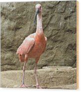 A Scarlet Ibis Stands Perched On A Rock Wood Print