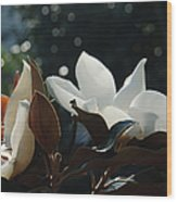 A Sea Of Magnolias Wood Print