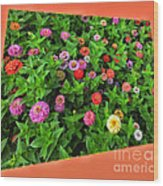 A Sea Of Zinnias 06 Wood Print