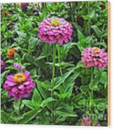 A Sea Of Zinnias 09 Wood Print