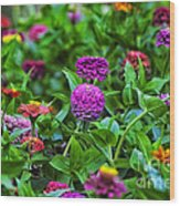 A Sea Of Zinnias 14 Wood Print