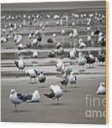 A Seagulls Life Wood Print by Sheldon Blackwell