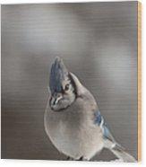 A Blue Jay Sits Waiting Wood Print