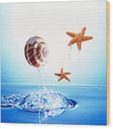 A Shell And Two Starfish Floating Wood Print