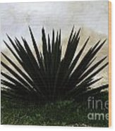 A Simple Yucca Wood Print